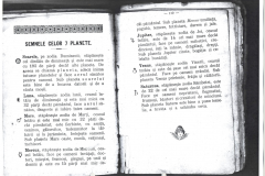 Pascalie 3 (Copy)